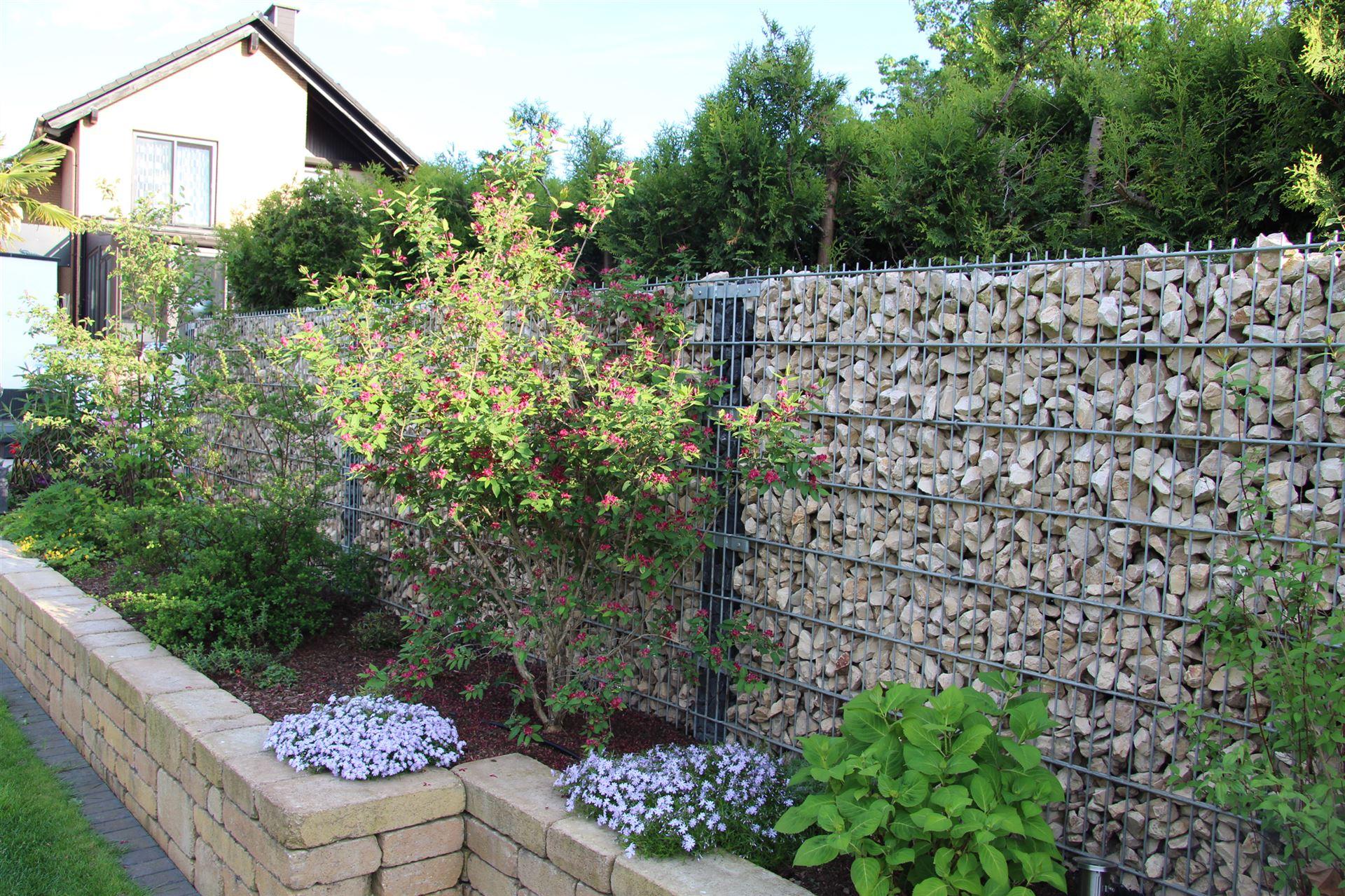 Steinkorbwand mit drahtpfosten - Gabionenwand bepflanzen ...